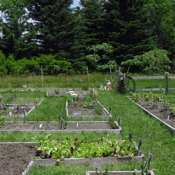 A raised bed garden.