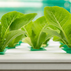 A small hydroponic gardening system.