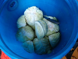 Full cabbage heads and quarters in the barrel