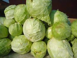 Cabbage heads harvest