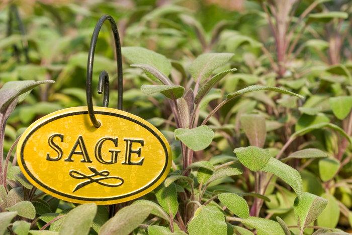 Sage sign garden