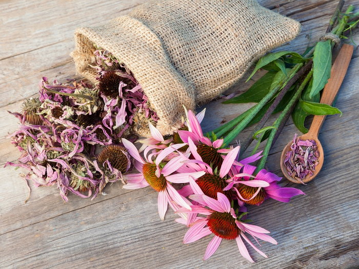 Fresh and dried echinacea