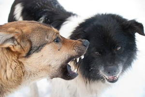 Dog Aggression towards Other Dogs