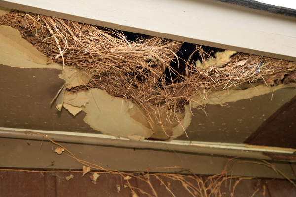 Roof bird nest