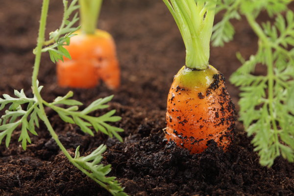 How To Plant A One Container Vegetable Garden