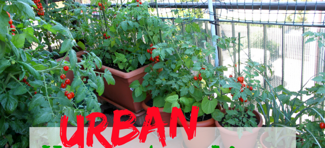 Don T Let Your Urban Environment Keep You From Elishing Self Sufficiency Homesteading
