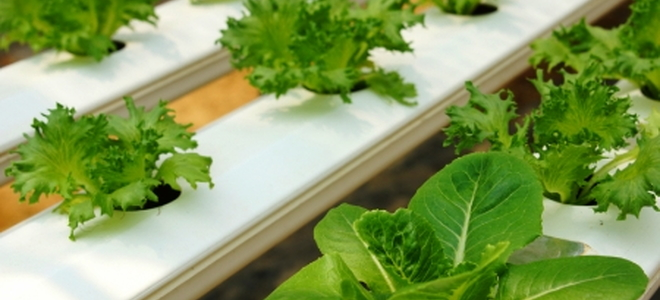 Aquaponic Systems Do It Yourself : Aquaponics system kit vs homemade doityourself