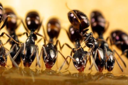 Natural ways to keep ants away - Keep ants away in simple ways ...
