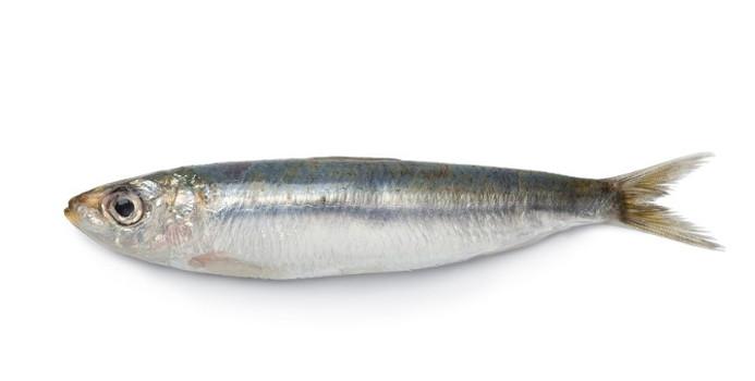 sardine_000016732996_Small.jpg