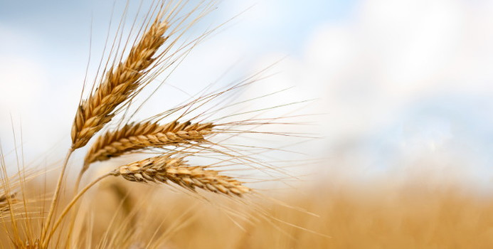 Barley_000013870739_Small.jpg