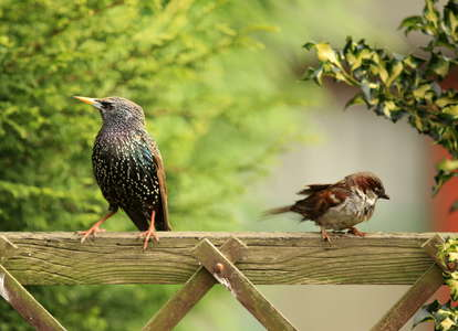 Backyard birds on a fence