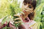 man smokes marijuana legally after prop 64