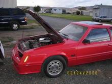 1982/2006 GT Mustangs