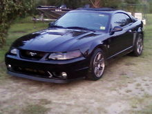 My Stang