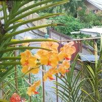 moms orchids