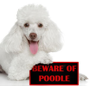 Beware if POODLE