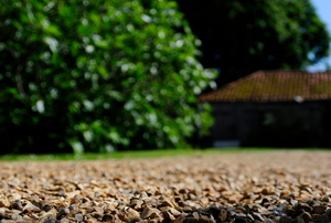 A close-up image of a gravel driveway with a house and a tree in the background.