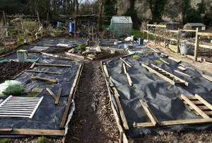 Raised garden beds covered in plastic for the winter.