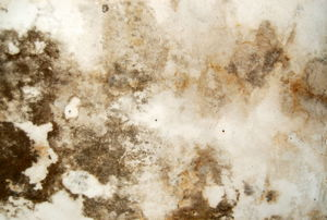Water stained plaster