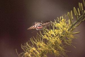 A moth on a plant.
