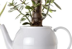 Succulent plants growing from a tea pot