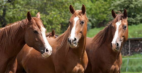 Image of horses.