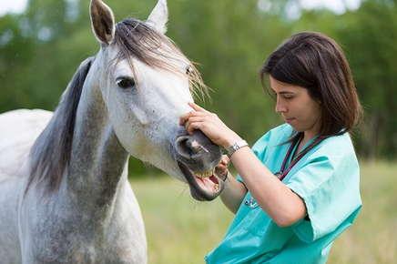 Image of vet checking horses teeth.