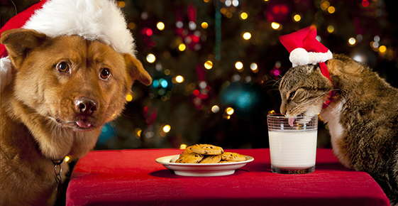 Image of a dog and cat dressed for the holidays.