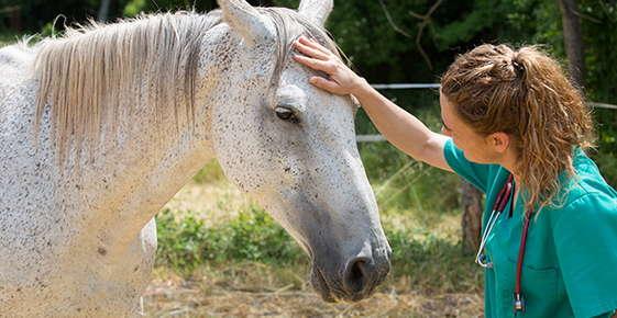 Image of vet examining horse.