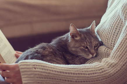 image of a senior cat.