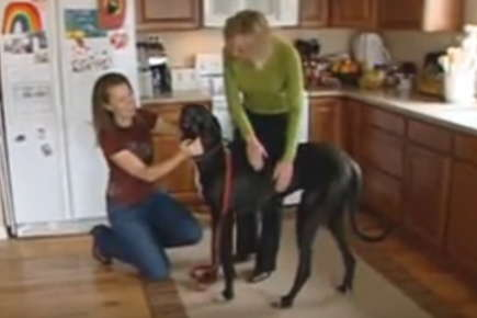 Image of two women petting a large dog in a kitchen.