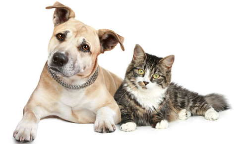 image of curious dog and cat looking ahead