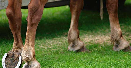 Image of horse feet.