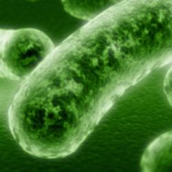 garden diseases