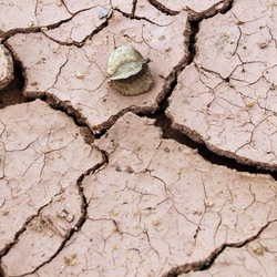 Cracked clay soil
