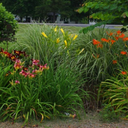 Small garden bed with daylilies and small trees