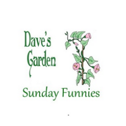 dave's garden vine and logo