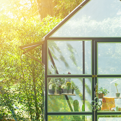 Greenhouse in the Sunlight