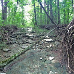 Shady area of a cedar glade