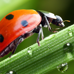 Ladybug on dew covered stem