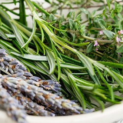 Rosemary herbs in a white porcelain bowl
