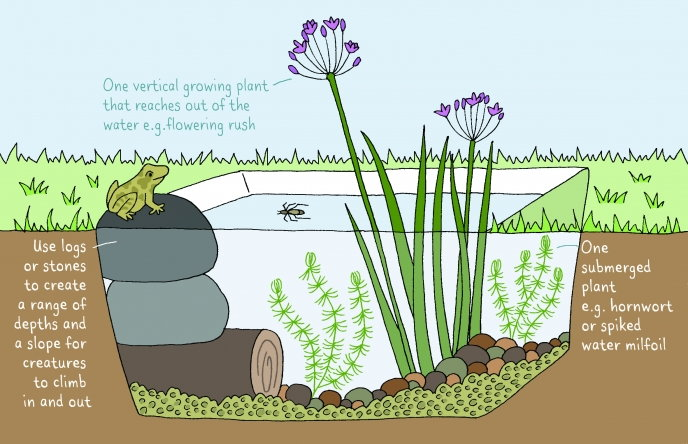 layout instructions for a pond