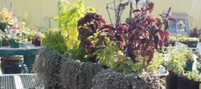 Daveu0027s Garden
