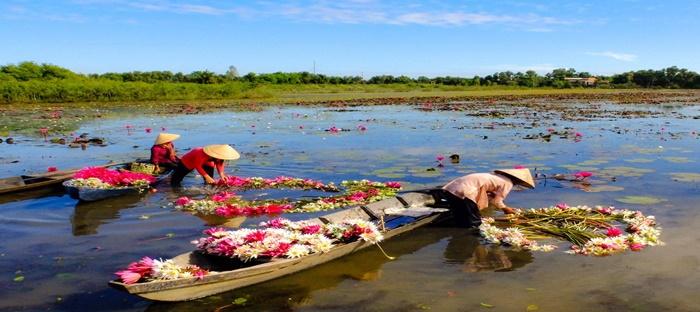 people harvesting water lily flowers
