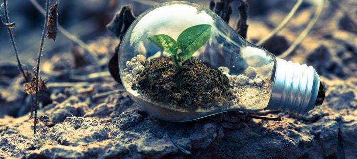 seedling inside of a light bulb