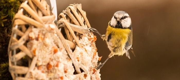 wild bird perched on log