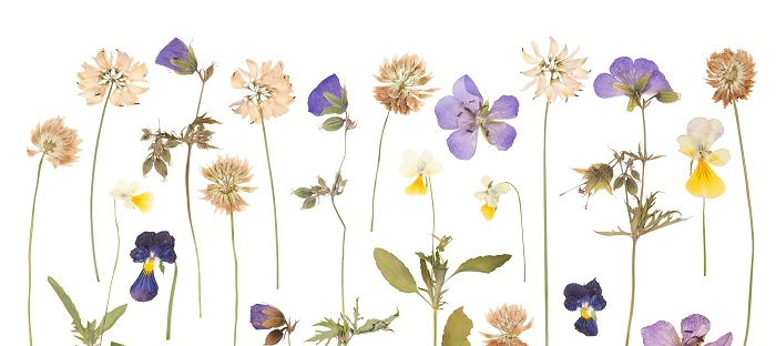 10 unusual uses of pressed flowers in the home daves garden love your flower garden want to be reminded of it all winter use pressed flowers to make your home a garden in and of itself mightylinksfo