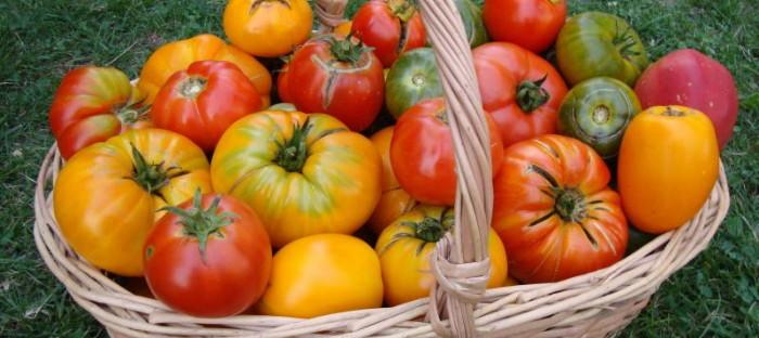 colorful basket of heirloom tomatoes