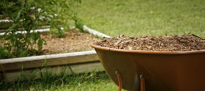Wheelbarrow full of mulch in front of a rectangular garden bed
