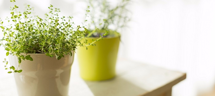 Hardy Indoor Plants That Help Clean Your Air - Dave\'s Garden